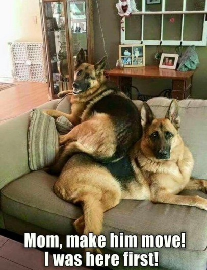 sibling-rivalry-tv-sofa-lounge